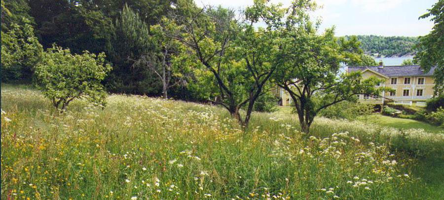 Furøya eplehagen